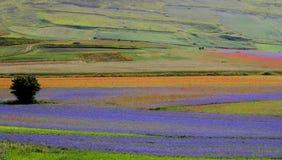 Italien - Umbria - Castelluccio Arkivfoton