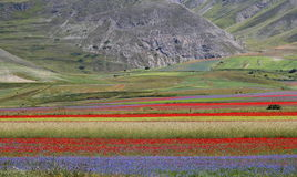 Italien - Umbria - Castelluccio färger Royaltyfri Bild