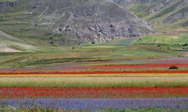 Italien- - Umbrien- - Castelluccio-Farben Lizenzfreies Stockbild