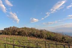 Italien vingård på Noli Royaltyfri Foto