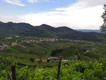 Italien vingårdar arkivbild