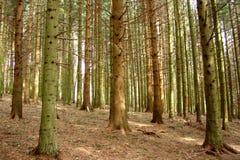 Italienische Bäume Lizenzfreie Stockfotos