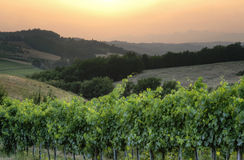 Italienische Chianti Weintrauben an der Sonnenunterganglandschaft stockbild