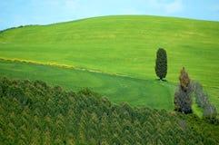 Italienische Felder Stockfotos