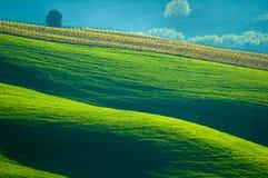 Italienische Felder Lizenzfreies Stockfoto