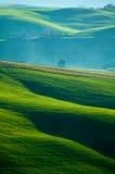 Italienische Felder Stockfoto