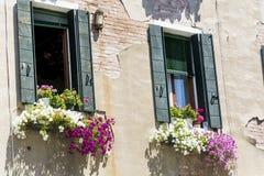 Italienische Fenster der schönen Weinlese mit Petunienblumen Stockfoto