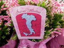 Italienische Heide Stockfotos