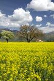Italienische Landschaft im Frühjahr Stockbild