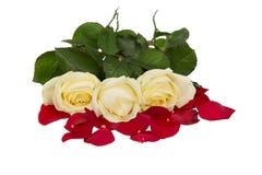 Italienische Rosen. Rot, Weiß und Grün. Lokalisiert auf Weiß Stockfotografie