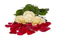 Italienische Rosen. Rot, Weiß und Grün. Lokalisiert auf Weiß Stockfotos