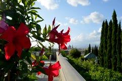 Italienische rote Blumen Lizenzfreies Stockbild