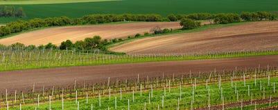 Italienische Sommerweinberge Stockfotos