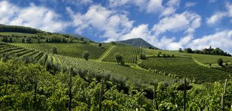 Italienische Weinberge Stockfoto