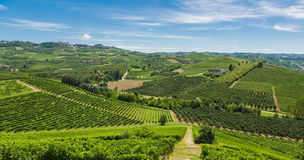 Italienische Weinberge Lizenzfreies Stockfoto