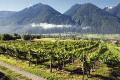 Italienische Weinberge Lizenzfreies Stockbild