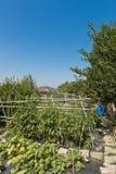 Italienischer Gemüsegarten Lizenzfreies Stockfoto