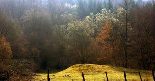 Italienischer Wald Stockfoto