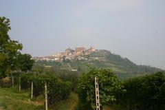 Italienischer Weinberg Stockbild