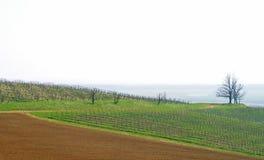 Italienischer Weinberg Lizenzfreie Stockfotos