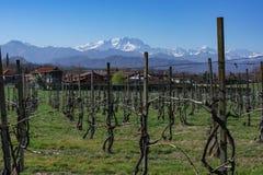 Italienischer Weinberg mit Alpen im Hintergrund stockfoto