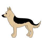 Italienischer Windhund Lizenzfreie Stockbilder