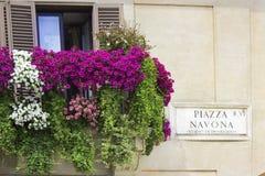 Italiensk balkong som dekoreras med blommapetunior Arkivfoton
