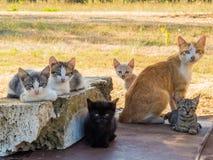 Italiensk kattfamilj Arkivfoto