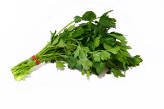 italiensk parsley Royaltyfri Bild