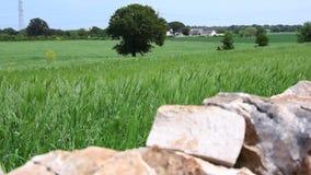 Italiensk traditionell bygd i den Puglia regionen stock video
