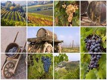 Italiensk vingård Arkivfoto