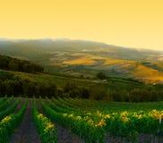 italiensk vingård Royaltyfria Foton