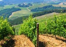 italienska vingårdar Arkivfoton
