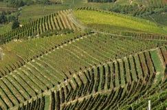 Italienska vingårdar Arkivbilder