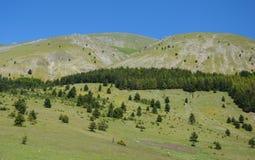 Italienskt landskap i sommar - kullar och skog Arkivbilder