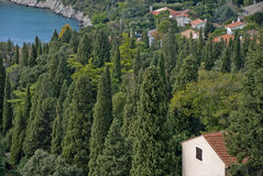 Italy. Typcial italian landscape with cypresses stock images