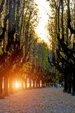 Italy, Angera.Wonderful autumn avenue for walking, large trees with yellow leaves. Silhouettes of trees in the rays of the setting Royalty Free Stock Images