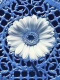 Italy azul Imagem de Stock Royalty Free