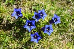 Italy_Botany Immagini Stock