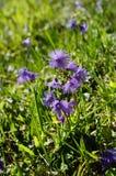 Italy_Botany Royalty Free Stock Photo