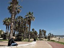 Italy, the  Civitavecchia sea front. People sitting on a beach with palm trees royalty free stock photography