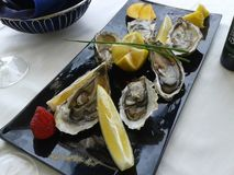Oysters, sammer, sea, Italy. Italy cuisine, exquisite meal, pleasure, wine, trip, dream, Italy is a beautiful country Royalty Free Stock Photography