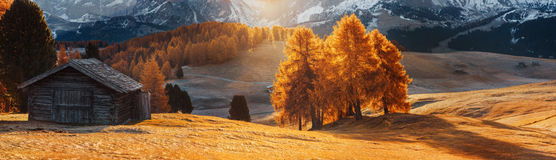 Italy. Dolomites. Autumn landscape with bright colors, house and larch trees in the soft sunlight. Stock Images