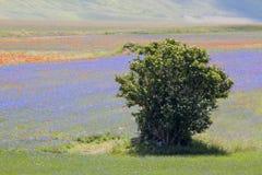 italy krajobraz Obrazy Royalty Free