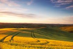 italy Landskap av Tuscany på gryning royaltyfri bild