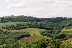 italy liggandeumbria vingårdar Royaltyfri Bild