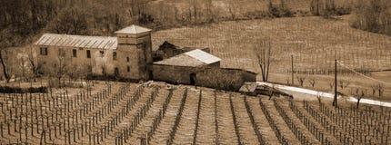 Italy. Liguria. Vinhedo italiano com casa de campo imagens de stock
