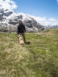 Italy, Lombardy, Alps, golden retriever puppy dog in mountain me. Adow with his man master, on the background ortles cevedale royalty free stock photography