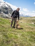 Italy, Lombardy, Alps, golden retriever puppy dog in mountain me. Adow with his man master, on the background ortles cevedale royalty free stock image