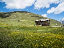 Italy, Lombardy, Livigno, alpine mountain landscape in summer fl Royalty Free Stock Images
